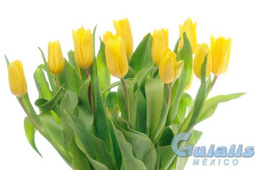 Flores en Teotitlán de Flores Magón