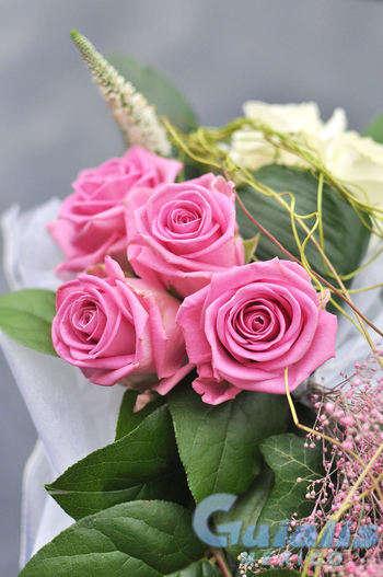 Flores en Tula