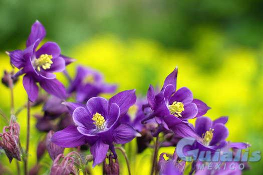 Flores Naturales en Pueblo Nuevo, Durango
