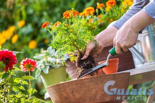 Flores y Plantas en Calpulalpan