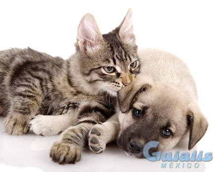 Animales y Mascotas en Filomeno Mata