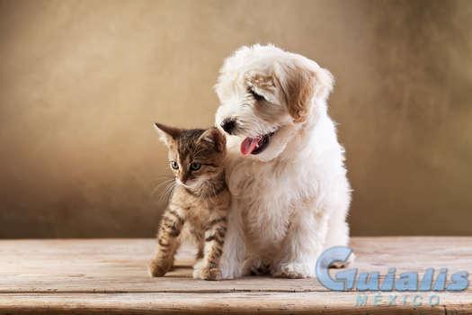 Mascotas en Xalisco