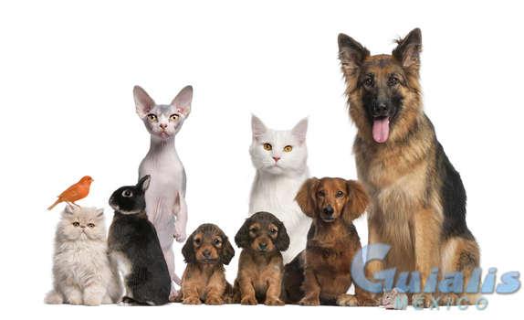 Mascotas en Papantla