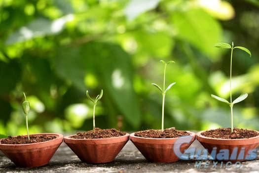 Plantas Naturales en Juan Aldama