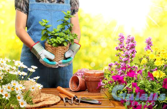 Plantas Naturales en Calpulalpan