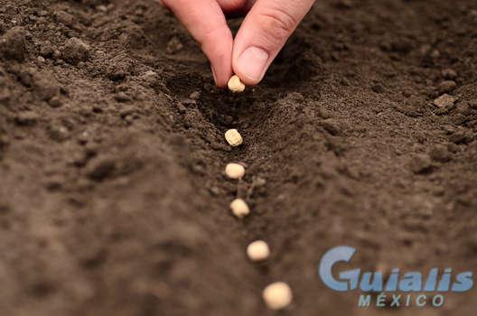 Semillas en Calpulalpan
