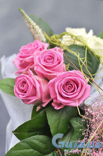 Flores en Francisco Z Mena