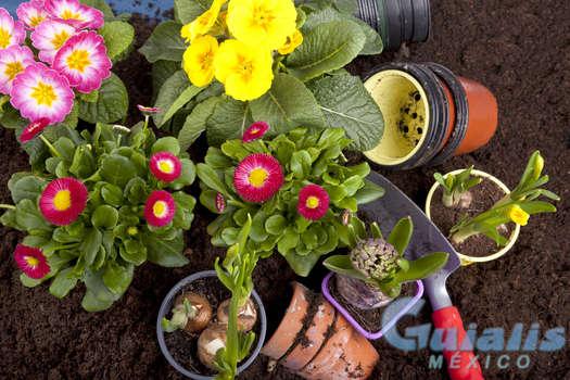 Flores y Plantas en Chapala