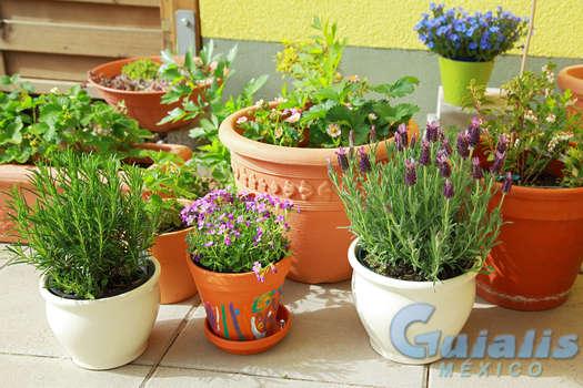 Plantas en La Magdalena Contreras
